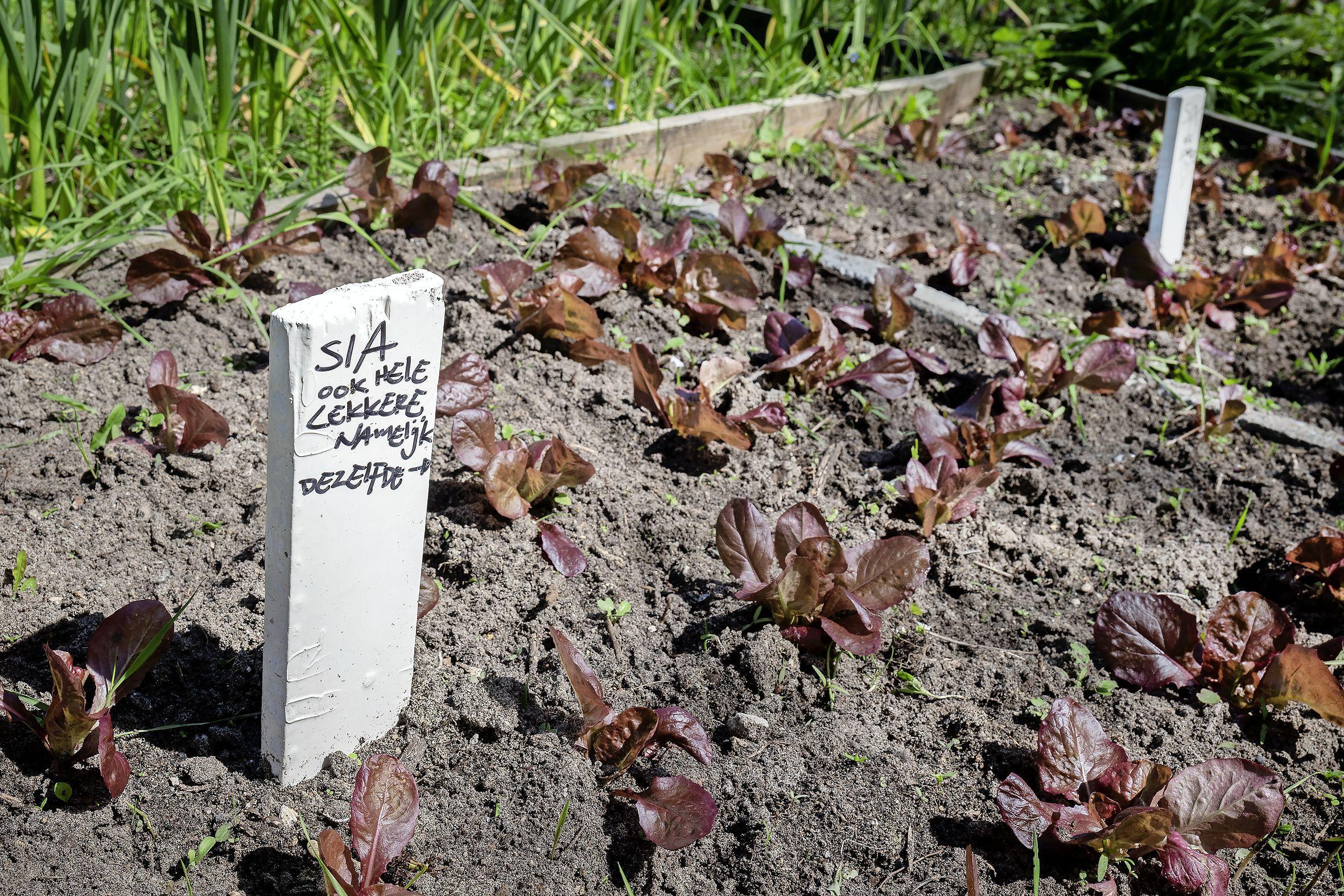 Tuin van Stichting Ecosol Effects