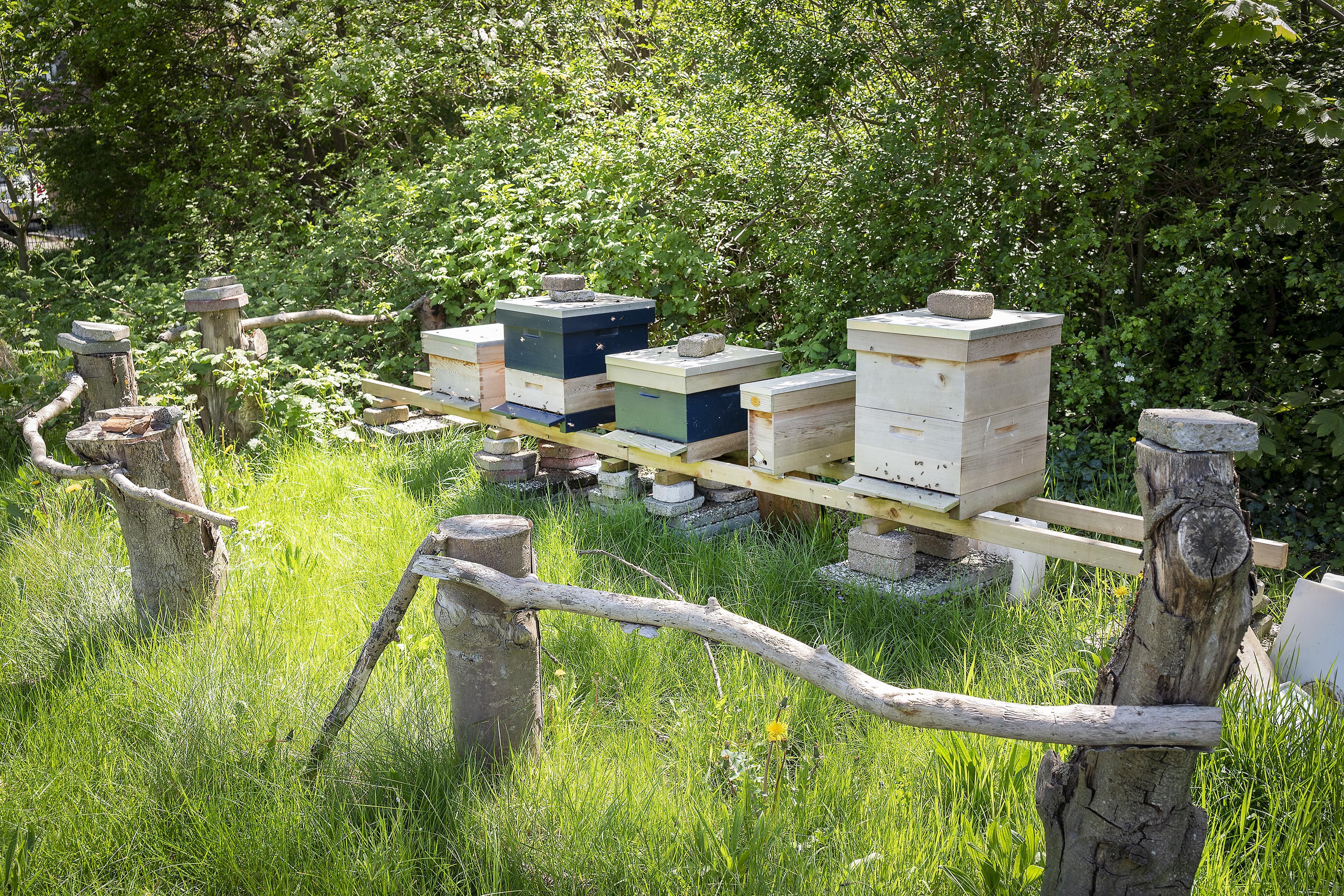 De bijenkas in de tuin van Ecosol Effect